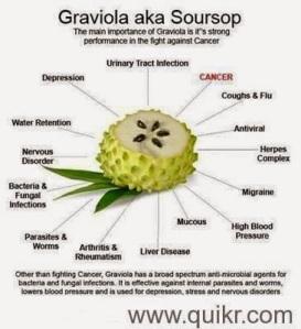 graviola3